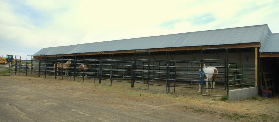 Cedar Creek Miniatures Diamond Reo Equestrian Park Filer Southern Idaho